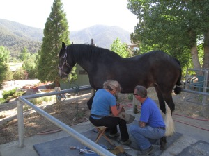 Hoof Training Session