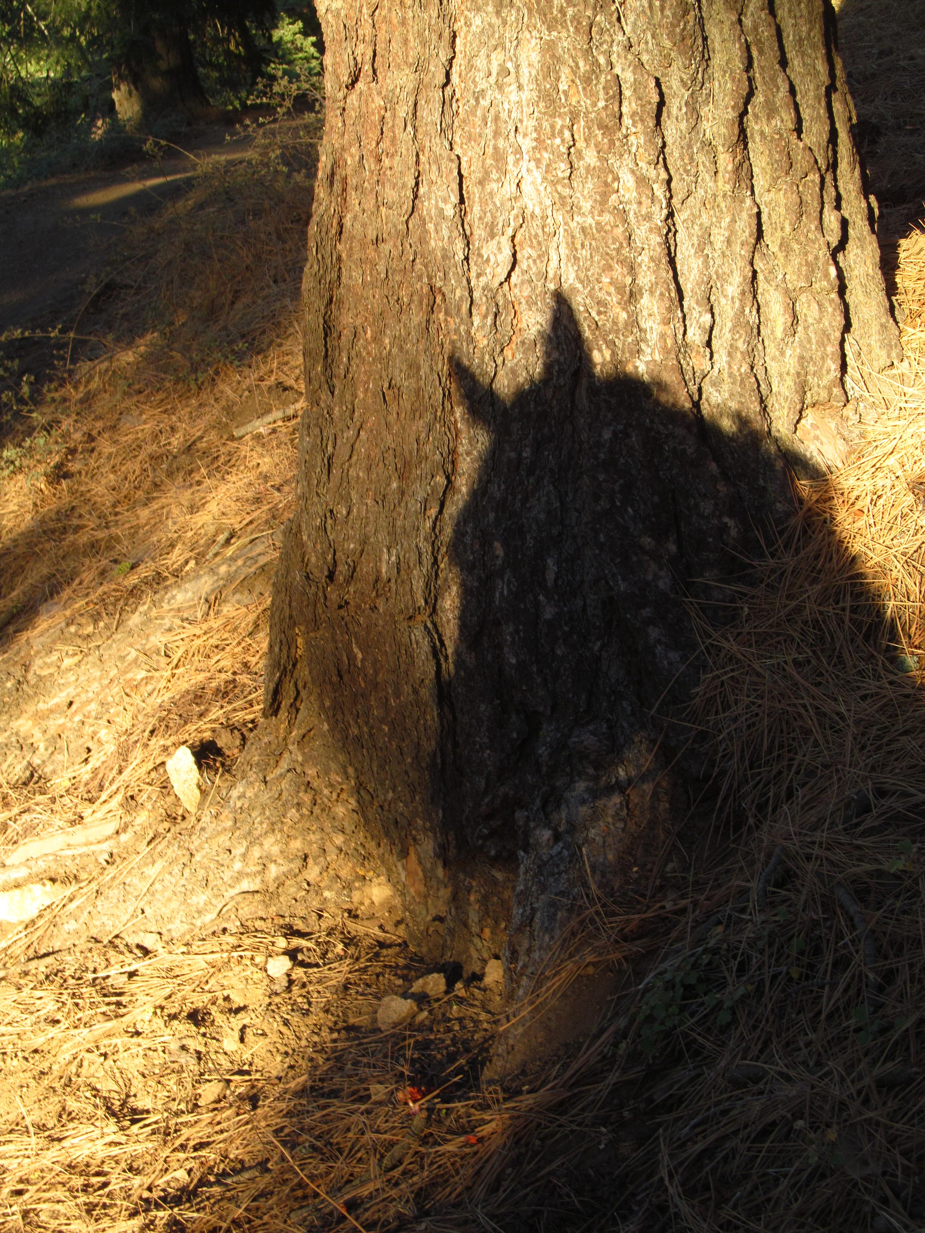 Laddie Tree Shadow