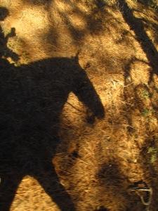 Laddie Shadow