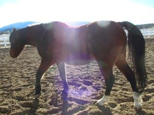 Starboy in Sunlight