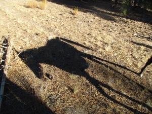Hokuleia Shadow Horse
