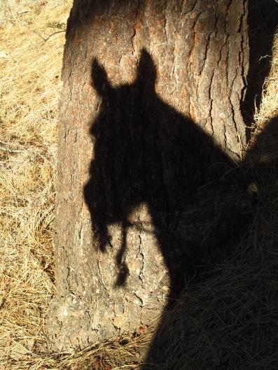 Fae Shadow Tree McGill