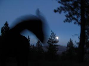 Shadow Horse Full Moon
