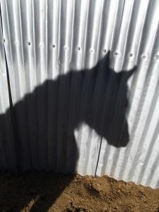 Hokuleia Tin Shadow