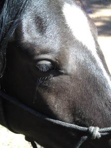 Wispy-Eyed Hokuleia
