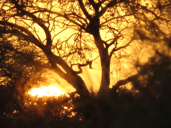 Dillingham Sunset