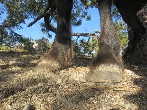 Fae Hooves Pinos -- Shoes