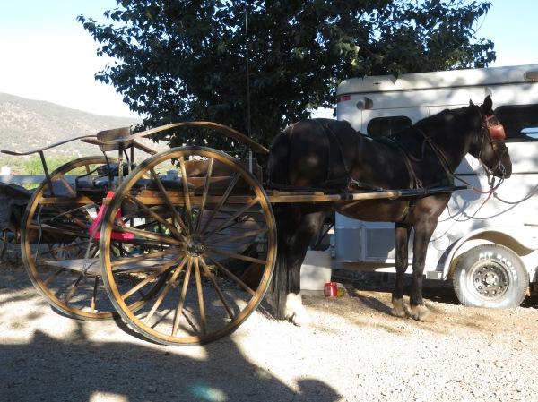 Laddie in Cart