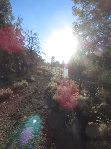 Magical Light Beams on the Trail