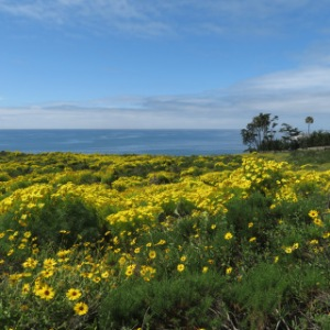 Malibu Spring