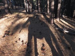 Forest Shadow Fae