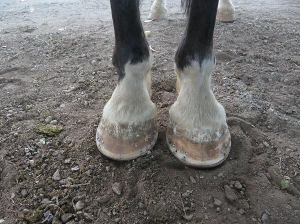 Lad's New Shoes